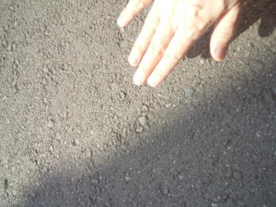 夏の強烈な日差しで焼かれたアスファルト・・・ 手で触れないくらい熱いので ワンちゃんたちの健康も気遣ってあげてください