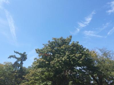 墓石は写せないので、霊園の木々と秋の空をパシャリ・・・ とはいえ気温は高めで汗だくになっちゃいました。