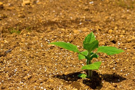 元気になる気持ちの芽。 大きく大きく育てましょう!