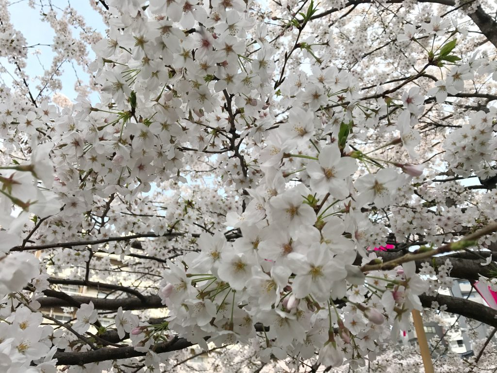 春は体が冷える季節。体も心も元気に過ごせるようヌクヌクでいよう!