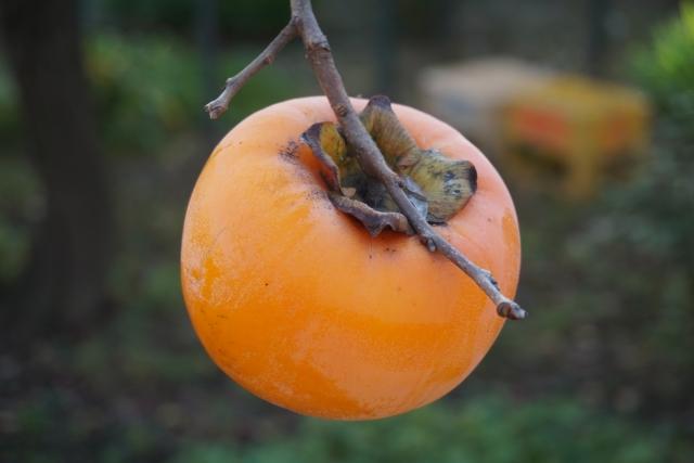 柿酢を初めて作った人は天才だと思う!